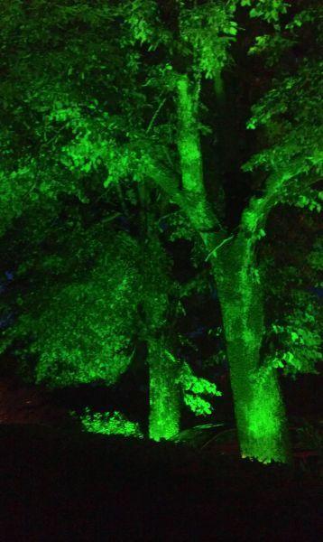 green_trees